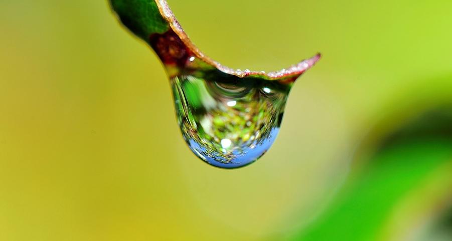 kapljični namakalni sistemi